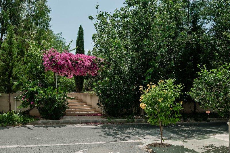 Artemis Cynthia Complex in Paphos, Zypern Süd (griechischer Teil) Garten